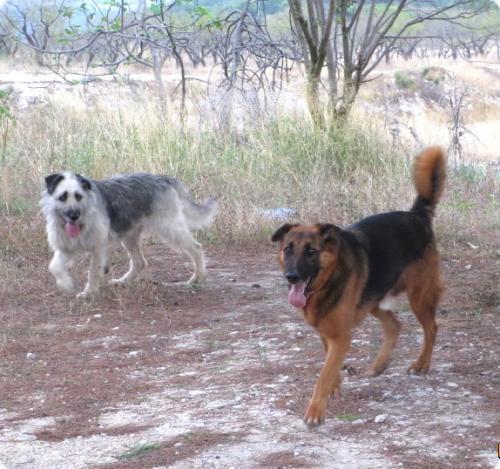 Timba & Curro
