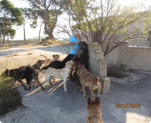 Susan con los perros