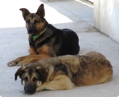Anita & Coco