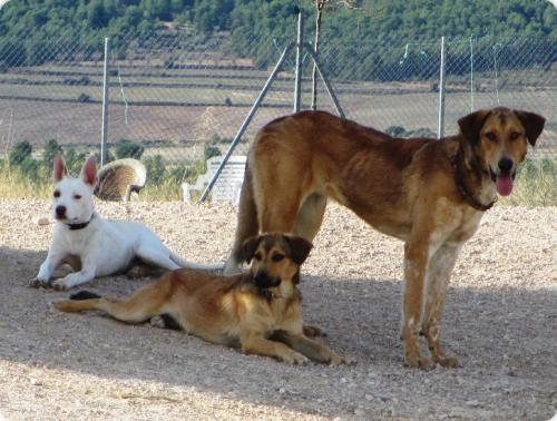 Francisco, Loli & Nika